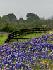 TX 2007 Brenham composite of church, fence  and bluebonnets