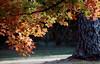 AR 1992 Eureka Springs Autumn leaves