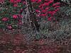 TX 2017/02 Soggy azaleas