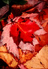 ME 1996 a pile of autumn leaves