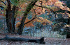 TX 1980 Lost Maples State Park Old log and autumn leaves