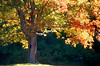 ME 1996 New England fall colors
