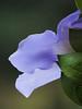 TX 2016/10 WC Skye flower portrait