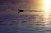 CO 1987 Denver twilight swim