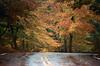 ME 1987 autumn curve