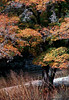 TX 1980 Lost Maples State Park autumn leaves and water