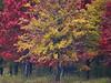 KS 2017/11 Autumn forest