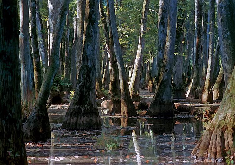 MS 1987 swamp along the Natchez Trace