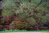 NH 1987 autumn tree tangle