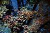 VA 1987 autumn leaves