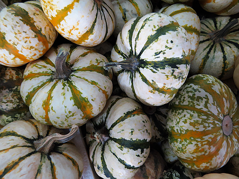 TX 2016/10 WC Pile of small pumpkins