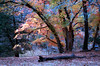 TX 1980 Lost Maples State Park autumn colors