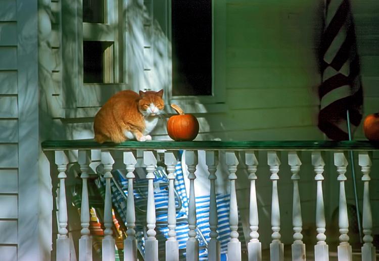 1987 CT Autumn cat