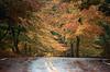 1987 ME Autumn curve