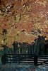 1987 TN Autumn gold fenced