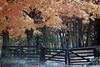 1987 TN Autumn leaves and fence
