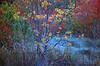 1985 TX Galveston Autumn tallow colors