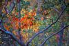 1985 TX Galveston China berry leaves