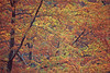 1984 TX Kerrville bald cypress