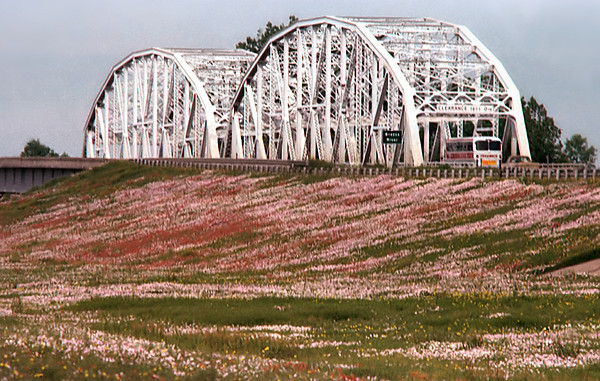 1975 TX Brazos River bridge, bus and wildflowers
