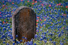 1976 TX Round Top Headstone and wildflowers in the cemetery