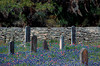 1976 TX Round Top Cemetery, stacked stone wall and bluebonnets
