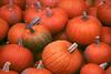 1991 VT Pumpkins