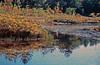 1987 VT Autumn pond
