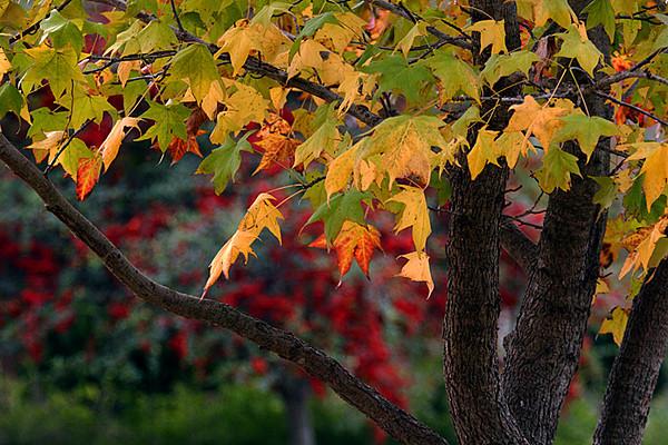 2010 12 Flowers Autumn colors
