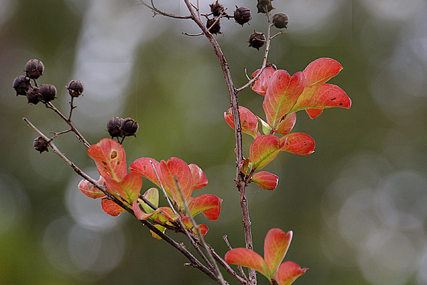 ARE 2008 NOV Autumn Crepe