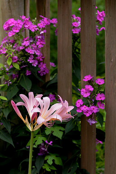 ARE JUL 2007 Garden Fence