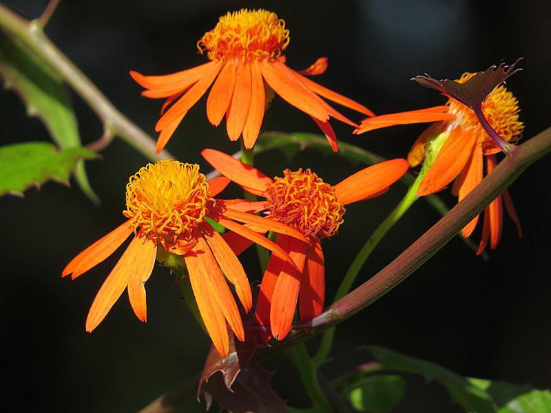 2013 10 October orange