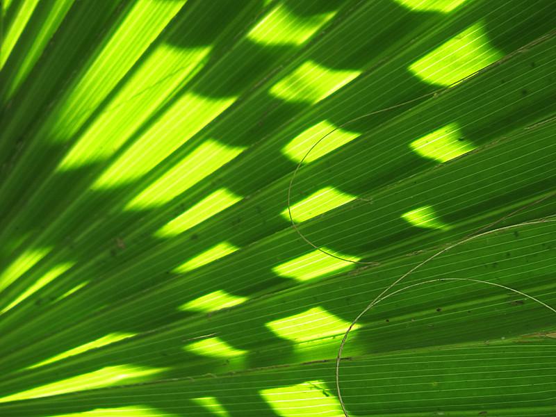 2013 10 Lime green fan