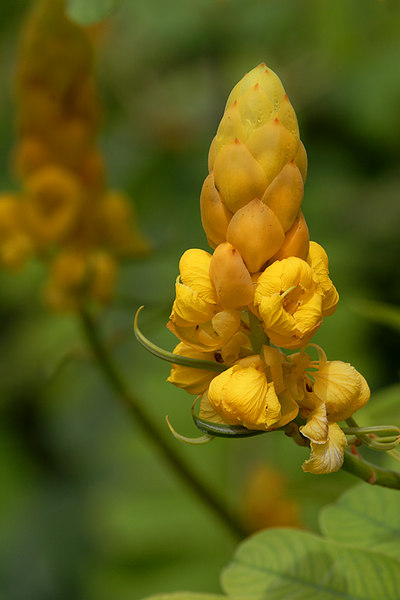 ARE Yellow Blooms