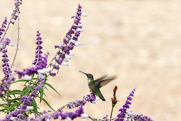 ARE 2009 OCT Hummingbird Rest