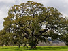 WC MAR 2008 ARE Live Oak