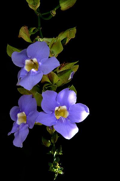 ARE Sky Flowers