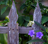 ARE 2009 JUL Old Fence