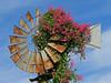 2013 10 Wind flowers