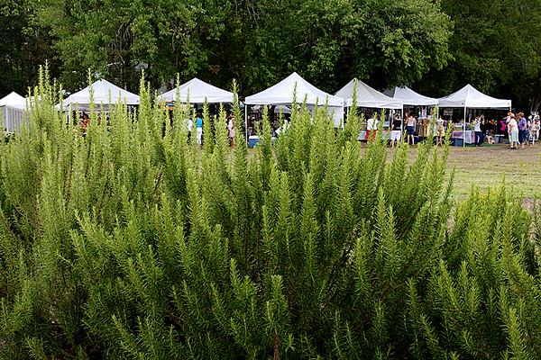 Vendor Tent Lineup