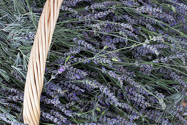 CHLF Lavender Bounty