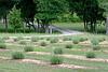 CHLF 2009 MAY Farm 01