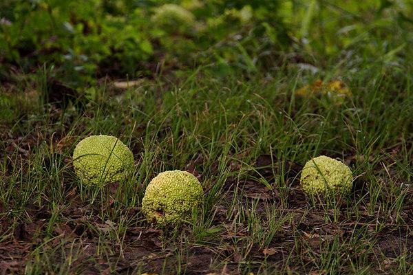 CHLF Sticky Balls