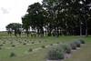 CHLF 2009 MAY Farm 13