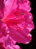 2014 03 30 Flowers TX 59W Side show