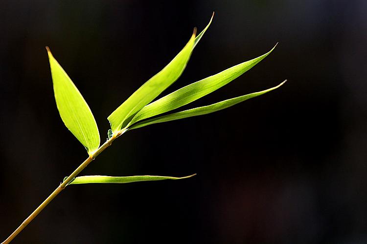 MG Bamboo Leaves