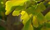 2012 12 01 Flowers MG yellow green leaf