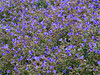 2012 12 01 Flowers MG purple bed