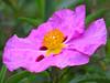 2016 04 09 MG Ruffled petals