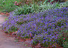 2012 12 01 Flowers MG blue hillside